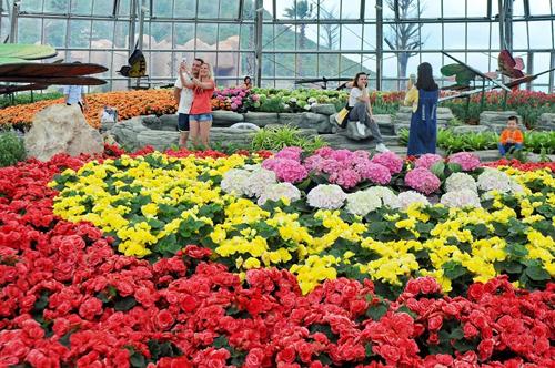 Nhà hoa ôn đới châu Âu rực rỡ sắc màu thích hợp để các cặp đôi ghi lại những khoảnh khắc hạnh phúc.