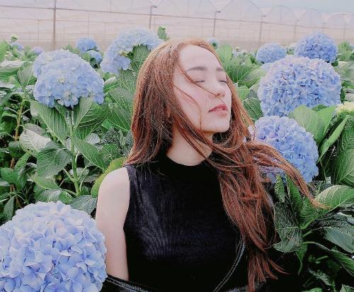 Ca sĩ Minh Hằng chọn Đà Lạt là điểm đến đầu năm. Cô cũng tranh thủ thực hiện bộ ảnh ở đồi thông và vườn hoa cẩm tú cầu, những khung cảnh rất đặc trưng của thành phố ngàn hoa.