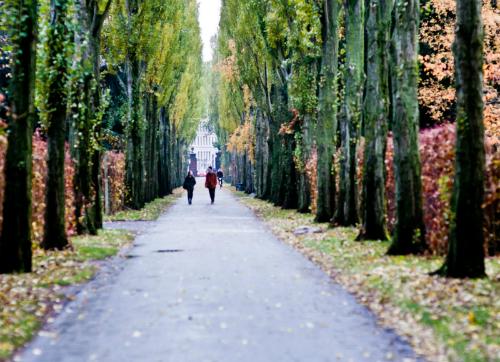Nghĩa trang Assistens Kirkegaarda là nơi người dân đi dạo, chạy bộ, picnic hay tắm nắng... Ảnh: Pinterest.