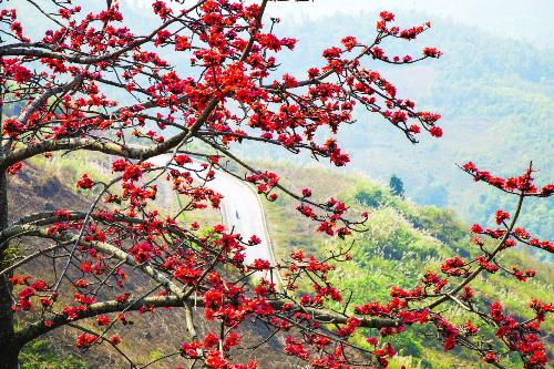 Hoa gạo đỏ rực trông như những đốm lửa ven triền núi, trên những cội cây cô đơn thường đứng sững một mình giữa núi rừng. Màu hoa đỏ gợi bao nhớ nhung, chia lìa và sum họp, màu của lửa, cũng là của hy vọng, niềm tin. Cây gạo ít khi mọc nhiều thành hàng, trái lại đây đó một cây một đứng lặng lẽ, vào mùa hoa thì toàn cây là một màu đỏ sáng bừng một góc trời, tuyệt nhiênkhông cònchiếc lá nàosót lại trên cành.