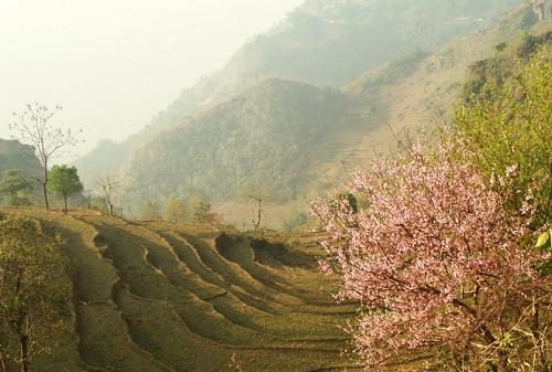 Khi cái se lạnh cuối năm nhè nhẹ trôi qua trên miền Tây Bắc, mùa giêng hai rạng rỡ tìm về, đó là lúc những cung đường vùng cao sẽ khiến du khách mê mải trong sắc hoa xuân rực rỡ. Với nền văn hóa đặc sắc và thân thiện của đồng bào dân tộc thiểu số cùng những bản làng lưng chừng núi nên thơ, cung đường khám phá Tây Bắc mùa xuân được xem là cung đường đẹp nhất tại Việt Nam.Hoa cải vàng thì cuối tháng 12 có nơi đã rộ. Giêng hai thì đào mận mỗi thứ một sắc rực rỡ khắp đất trời. Vào đến tháng 3, hoa gạo nở đỏ rựccả núi rừng, hoa ban bừng sáng trên những triền cao. Mỗi khoảnh khắc một loài hoa, một giai điệu núi rừng vang lên da diết trầm bổng và muôn phần tươi đẹp.