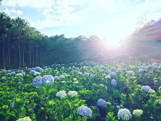 <p> <strong>Thung lũng Tình yêu</strong></p> <p> Đây là khu vườn hoa cẩm tú nằm ngay trong thành phố và có diện tích lên đến 5.000 m2. Điểm đặc biệt của khu vườn này là nằm ngay gần khu rừng thông xanh mướt, nhiều khóm mọc ngay dưới tán thông nên bạn có thể thoải mái chụp hình mọi lúc trong ngày. Để vào đây bạn phải mua vé tham quan Thung lũng Tình Yêu, giá 100.000 đồng/người lớn. Ảnh: <em>wattanai_win.</em></p>