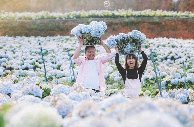 """<p class=""""Normal""""> <strong>Huyện Lạc Dương</strong></p> <p class=""""Normal""""> Cách Đà Lạt khoảng 15 km, vườn hoa thuộc huyện Lạc Dương bên cạnh tỉnh lộ 723 - tuyến đường nối thành phố Đà Lạt và Nha Trang. Đây là một trong những khu vườn cẩm tú cầu lớn nhất ở Lâm Đồng, với diện tích khoảng 2 ha. Ảnh: <em>CHIT Photography.</em></p>"""