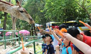Người Sài Gòn tấp nập đi cho thú ăn trong dịp Tết