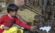 Đền thiêng nhung nhúc 20.000 con chuột ở Ấn Độ