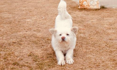 Một con chó tinh nghịchlàm dáng trước ống kính máy ảnh của du khách.