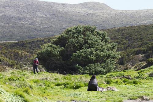 Thông Sitka mọc trơ trọi trên đảo Campell. Ảnh: Amusing.