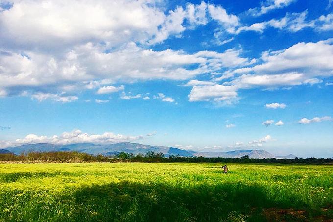 Cách đi đến cánh đồng hoa thì là đang gây sốt ở Ninh Thuận