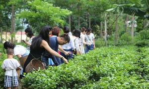 Du lịch nông nghiệp Việt Nam tìm hướng phát triển