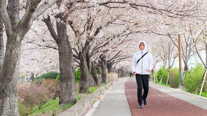 <p> Tuy là con đường có hoa anh đào dài nhất Hàn Quốc, nơi đây lại ít khách du lịch ghé chân, hầu như chỉ có người dân địa phương biết đến. Hiện trong tour khám phá xứ sở kim chi mùa hoa anh đào của công ty du lịch <em>Vietravel</em>, địa điểm này đã được vào lịch trình để tạo điểm nhấn mới đối với du khách Việt.</p>