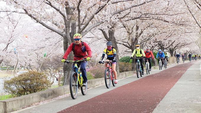 """<p class=""""Normal""""> Sáng sớm là thời điểm người dân tập thể dục, đi bộ hoặc chơi các môn thể thao như đạp xe. Trong gió, những cành hoa anh đào đung đưa, một vài bông hoa khẽ rơi tạo nên khung cảnh lãng mạn.</p>"""