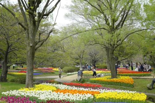 Chuyến khám phá Nhật Bản của blogger du lịch Thiết Nguyễn