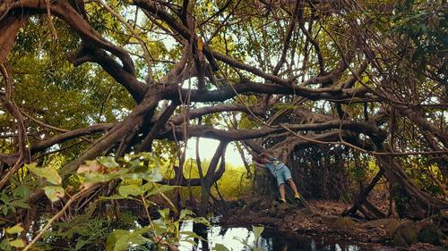 cây si trăm thân đã tồn tại hơn 300 năm, cách trung tâm quản lý 16km, là điểm xa nhất khách có thể tham quan.