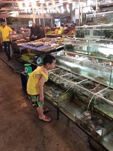 Tại chợ đêm, Gấu cũng rất thích đứng nhìn các bể cá lớn nhỏ xếp san sát nhau ở các cửa hàng ăn.