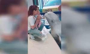 Bé gái Trung Quốc khóc thét vì nụ hôn của cá voi
