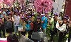 Tugo mở tour Nhật Bản khởi hành từ Hà Nội giá 20,9 triệu đồng