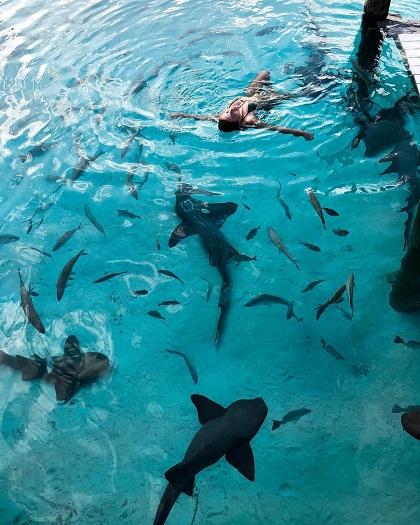 Cuối tháng 5, Anastasia tới Bahamas cùng bạn bè. Tiểu thư Nga nghỉ trong khách sạn Compass Cay Marina, trải nghiệm cảm giác bơi cùng đàn cá mập.