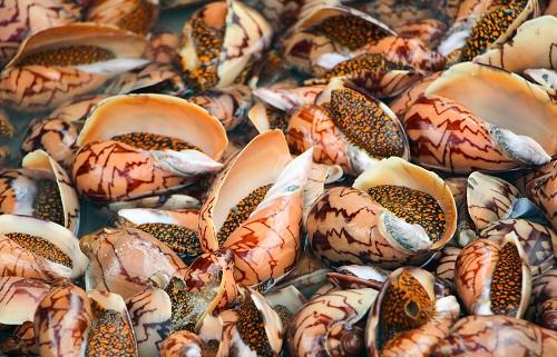 Ẩm thựcPhú Quốc nổi tiếng với nhiều loại hải sản tươi ngon và các nhà hàng dọc Bãi Trường là điểm đến không thể bỏ qua. Các món nướng, hấp được lòng du khách là ghẹ, cá, mực, tôm, sò điệp, bề bề... Tất cả đều tươi sống, khách chọn, nhân viên đem cân rồi mới sơ chế. Ốc vôi là một đặc sản thơm ngon mà bạn nên thử khi đến Phú Quốc, giá một con Ốc vôi tại những quán ốc địa phương thường là 25.000/con nướng với tiêu Phú Quốc. Ảnh: Katerina Chaikina.