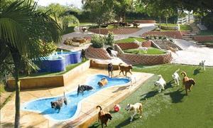 Khu nghỉ dưỡng 35 USD một đêm dành riêng cho chó