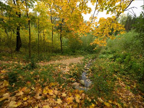Công viên Bittsevsky vào mùa thu. Ảnh: Flickr.