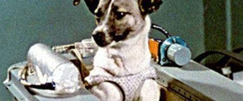 Laika là con chó đầu tiên bay vào vũ trụ và thiệt mạng. Còn Strelka và Belka là hai con chó đầu tiên được các nhà khoa học phóng vào không gian và sống sót trở về. Ảnh: Overland.