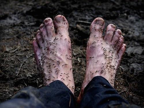 Chapple gặp rắc rối với côn trùng trong suốt chuyến đi,nhưng chúngthực sựđáng sợ khi anh cởi giày và tất. Ảnh:Amos Chapple.