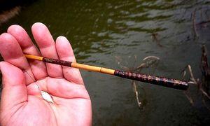 Nghệ thuật bắt cá nhỏ như móng tay ở Nhật