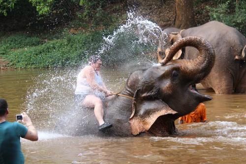 Dịch vụ tắm với voi có giá khoảng 11 USD một lần. Ảnh:TripAdvisor.
