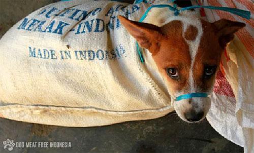 Thịt chó được bày bán tràn ngập trên các khu chợ ở Indonesia. Ảnh: News.