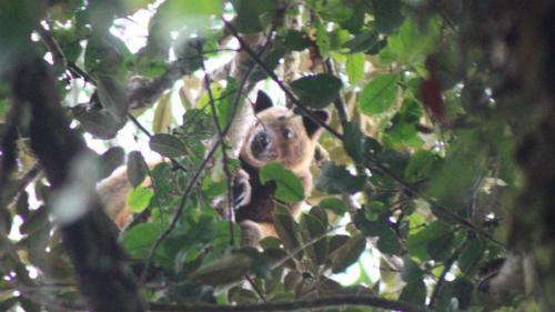 Tấm ảnh du khách Anhchụp con chuột túi leo cây Wondiwoi. Ảnh:Michael Smith.