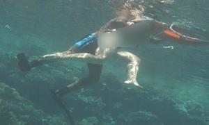 Tấm ảnh tố cáo HLV sàm sỡ du khách khi dạy lặn ở Ai Cập