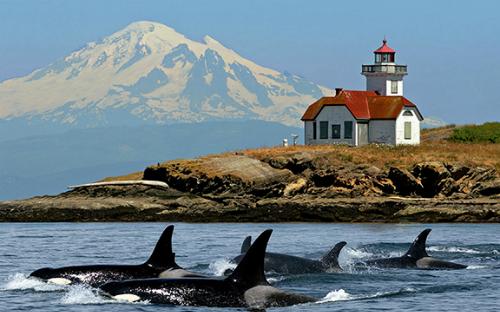 Đảo San Juan là điểm đến lý tưởng cho những du khách thích hoạt động thám hiểm đại dương, với nhiều lựa chọn về các tour du thuyền ngắm cá voi. Ảnh: San Juan Cruise.