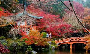 Dân Nhật Bản bực bội vì du khách thiếu ý thức