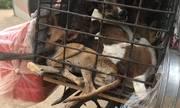 Cuộc chiến loại bỏ thói quen ăn thịt chó ở Campuchia