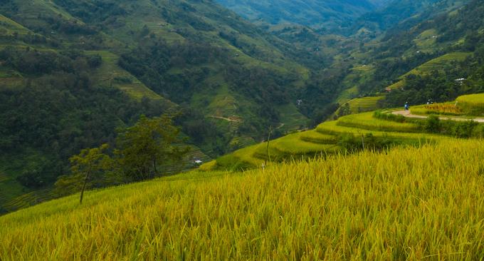<p> <strong>Thực tế:</strong> Ngoài các thành phố lớn như Hà Nội, Sài Gòn, không khí ở Việt Nam rất trong lành. Ở làng quê, du khách sẽ được hít thở khí trời sạch sẽ bên các cánh đồng lúa xanh tươi. Ảnh: <em>Kiều Dương</em>.</p>