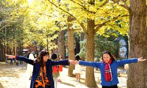 Khách Việt chuộng đi Nhật Bản, Hàn Quốc mùa thu