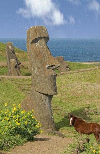 Hoa Lupin mọc quanh một bức tượng đá cổ trên đảo Phục Sinh. Ảnh: News.