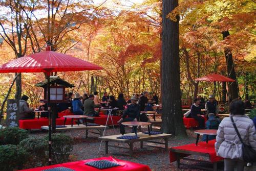 Người Nhật thích dã ngoại ngắm lá đỏ vào mùa thu. Ảnh: Thesimplereflections.