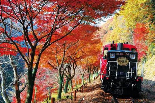 Gợi ý cho du khách là lựa chọn tàu hỏa để ngắm mùa lá đỏ lướt qua khung cửa sổ. Ảnh: Jrailpass.