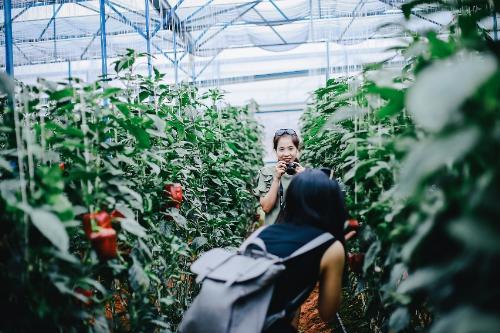 Tour chụp hình Đà Lạt: Bạn sẽ được khám phá những địa điểm đẹp tại Đà Lạt để ghi lại các bức ảnh ấn tượng như làng Cù Lần, đường hoa dã quỳ, nhà thờ Domain, đồng hoa cẩm tú cầu, vườn rau rạch... Giá tour vào khoảng 350.000 đồng một người.