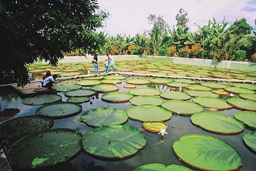 Chùa lá sen là một trong những điểm đến nổi tiếng ở Đồng Tháp. Ảnh: Linh Sea.