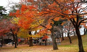 Mùa thu đủ sắc màu ở miền bắc nước Nhật