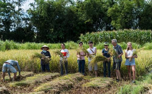 Du khách trả 20 - 37 USD để tham gia vào trải nghiệm như nông dân thứ thiệt tại Hội An. Ảnh: Backstreet Academy.