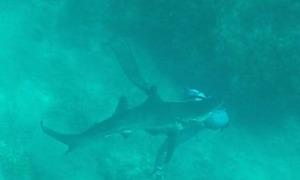 Khách Tây chia sẻ video bị cá mập cắn khi đi lặn ở Bahamas