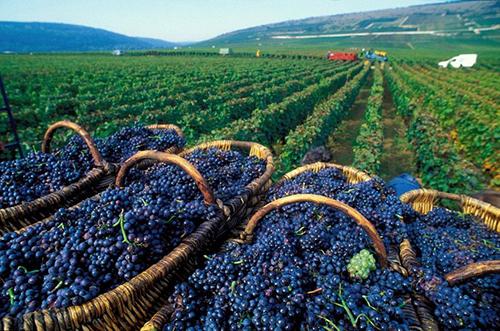 Bordeaux - vùng đất của các loại rượu vang ngon bậc nhất thế giới.