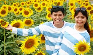 Khách đi hàng chục km xem hoa hướng dương ở ven sông Sài Gòn
