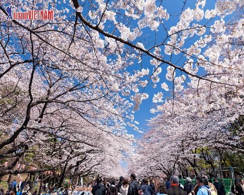 Tháng 3, 4 là mùa cao điểm du lịch của Nhật Bản.