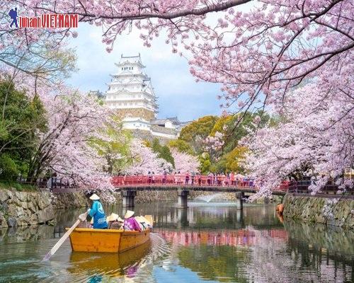 Tour đi Nhật Bản mùa anh đào giá từ 16,9 triệu đồng.