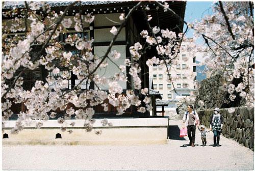 Nhật Bản, Hàn Quốc được nhiều người lựa chọn vì trùng thời điểm các mùa hoa nở. Ảnh: Nguyễn Thành Luân.
