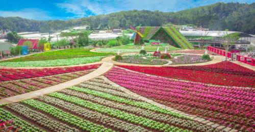 Màu sắc của mỗi loài hoa mang đến những ý nghĩa khác nhau cho khu vườn, như màu cam tượng trưng cho sự lãng mạn, nồng nhiệt và tình yêu; màu vàng tượng trưng cho sự viên mãn và hạnh phúc; màu đỏ mang biểu tượng của sự may mắn và giàu có.Ngoài ra, ở đây còn có gia đình Mèo quây quần bên nhau, kết hợp với gia đình Heo ngộ nghĩnh, nằm phơi nắng trên những đồi hoa xanh mát chào đón du khách trong năm mới Kỷ hợi2019.